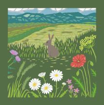 A Hare in a Meadow